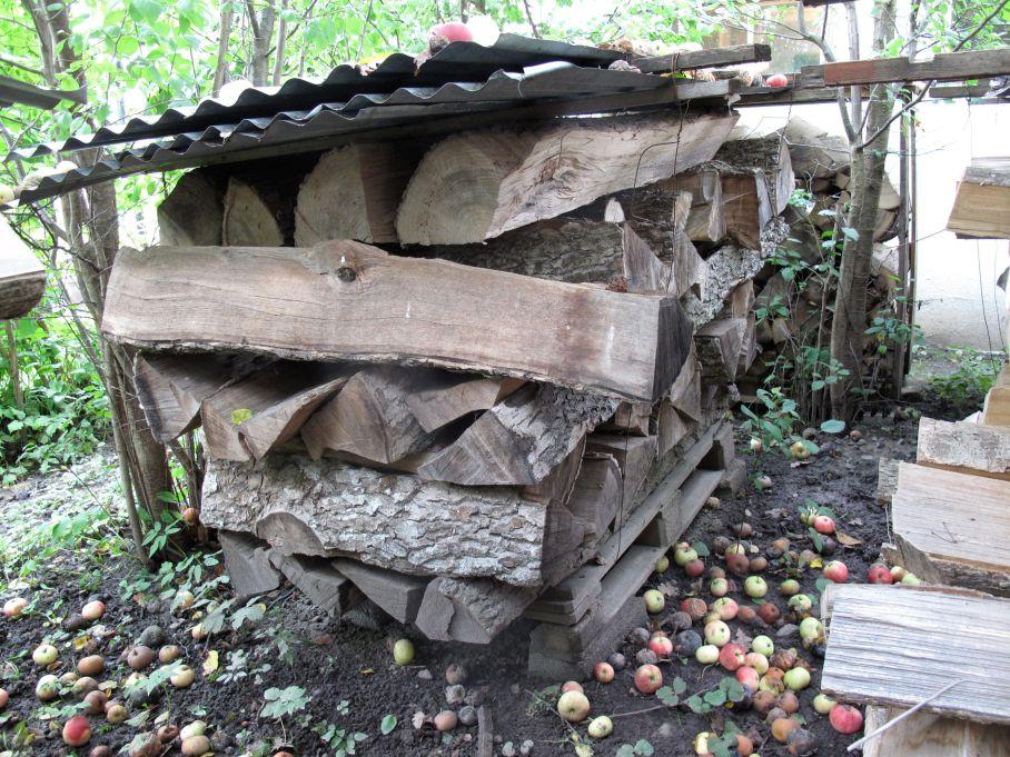 Kluven Alm med barken kvar. Foto: Marie Carlsson